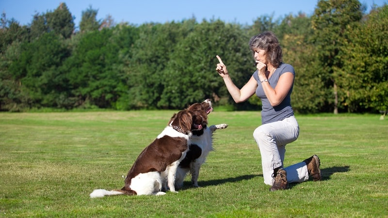 pros and cons of being an Animal Trainer