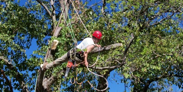 pros and cons of being a Tree Trimmer and Pruner
